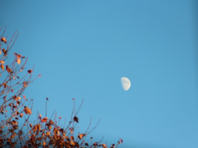 The November moon rises in mid-afternoon.