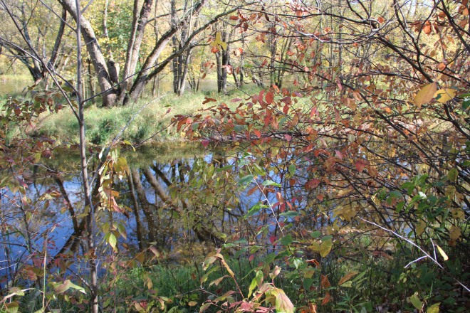 In late autumn, the river...