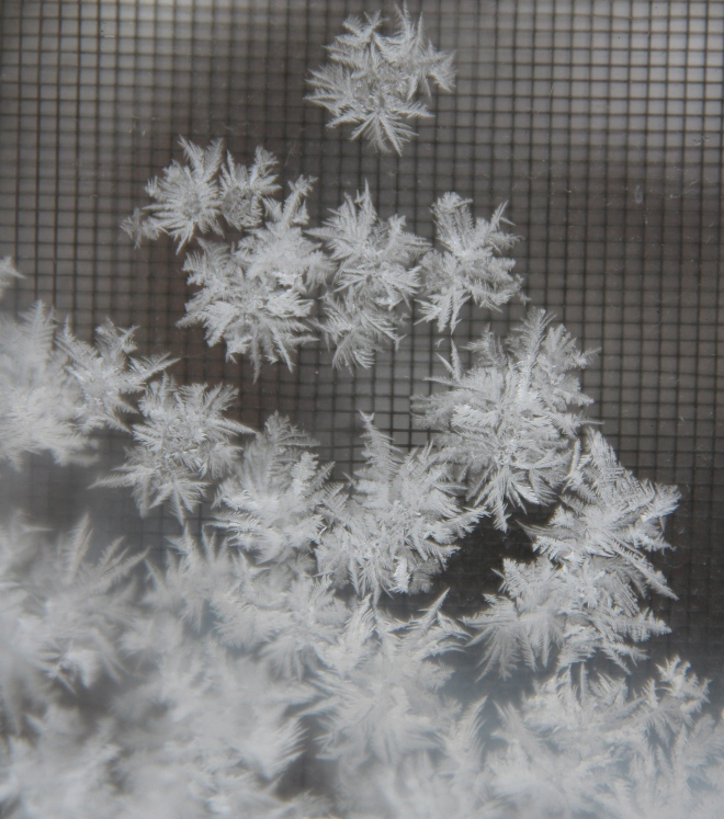 frost4