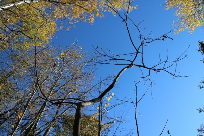 Bugling cranes, October