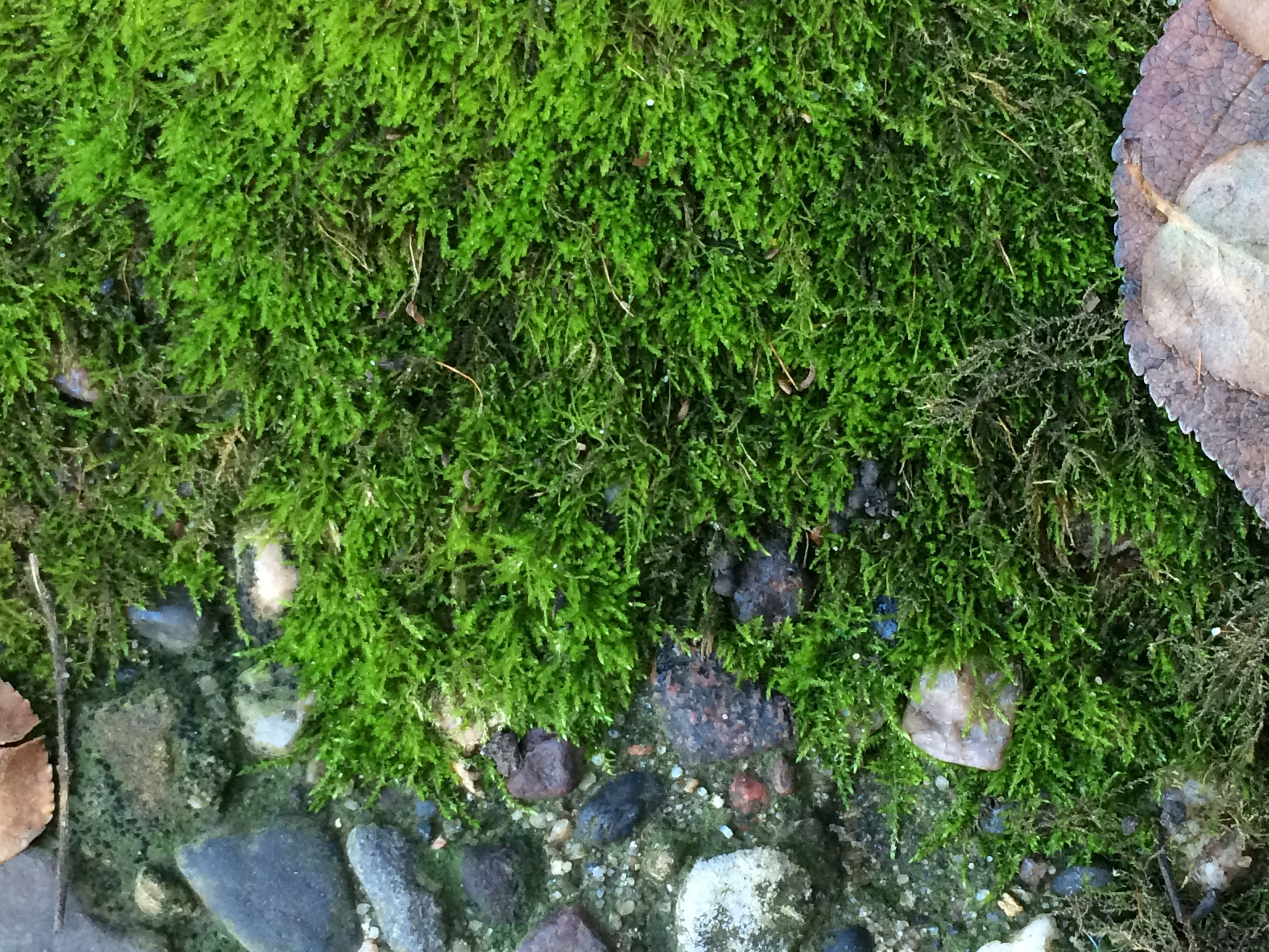 november 2015 u2013 nature garden life