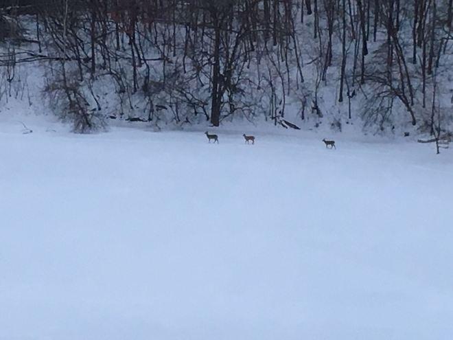 Pond Distant Deer