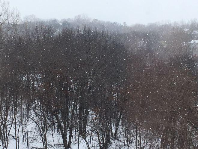 Pond Snowy Day
